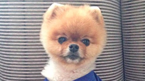Meet Jiff the Pom, Hollywood's Fave Instagram Dog!