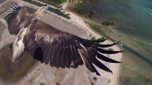 24 Epic Moments Captured By A Drone