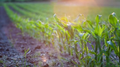 Will DuPont's Aggressive Ag Focus Backfire?
